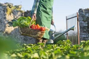 Coltivare orto casalingo
