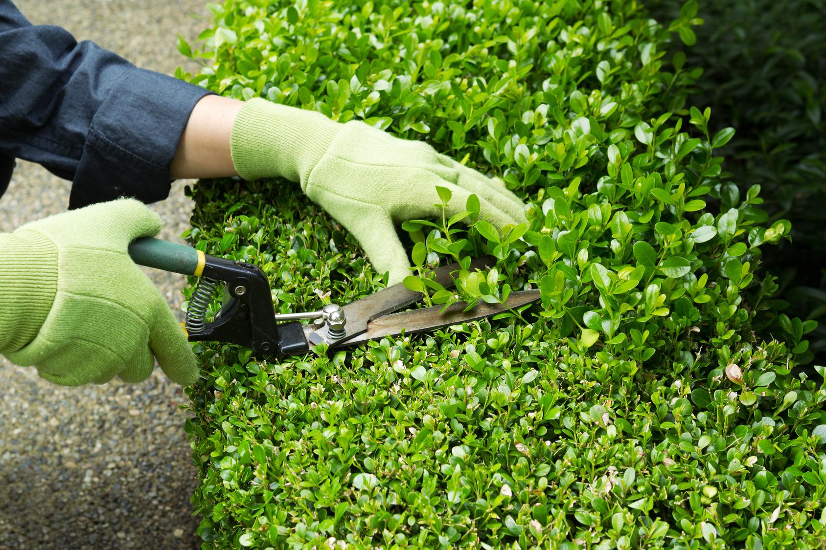 Giardino vivaio scariot for Trabajo de mantenimiento de jardines