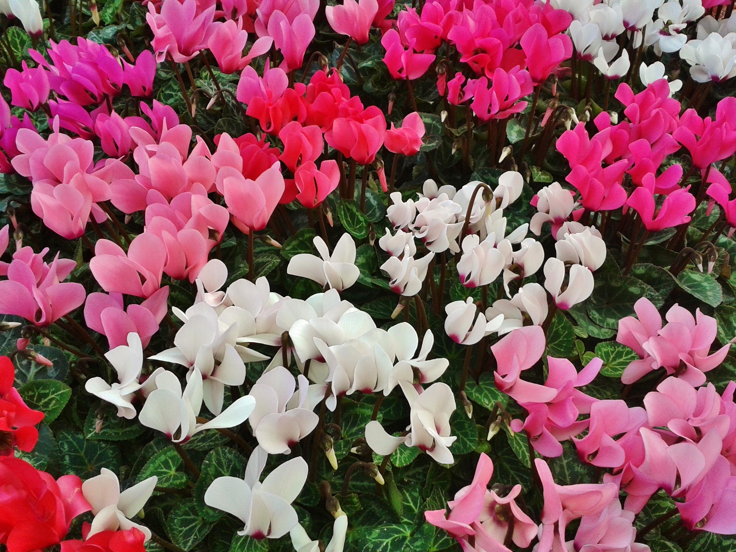 Fiori di settembre quali possiamo piantare vivaio scariot - Piante fiorite invernali da esterno ...