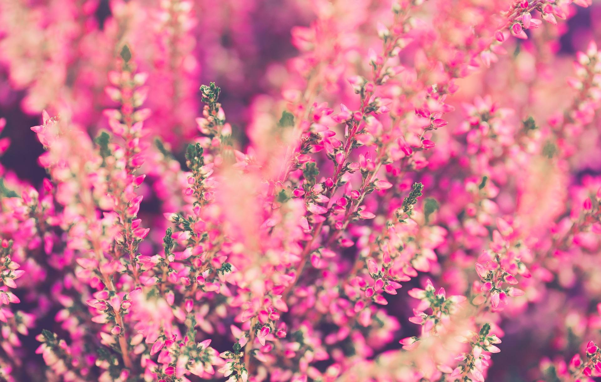 Fiori di novembre come avere fioriture invernali sul for Immagini fiori autunnali