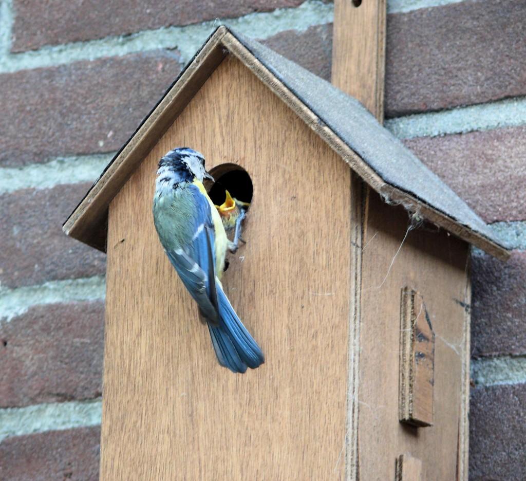 Casette per uccelli vivaio scariot - Uccelli che sbattono contro le finestre ...