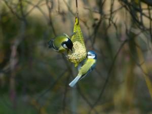 uccelli-mangime-primavera-nido-artificiale