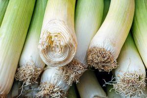 Cosa si pianta a settembre nell 39 orto vivaio scariot for Cosa si semina a settembre