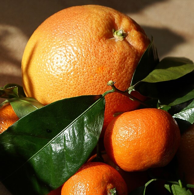 Coltivare piante di agrumi in vaso consigli pratici for Piante da frutto che resistono al freddo