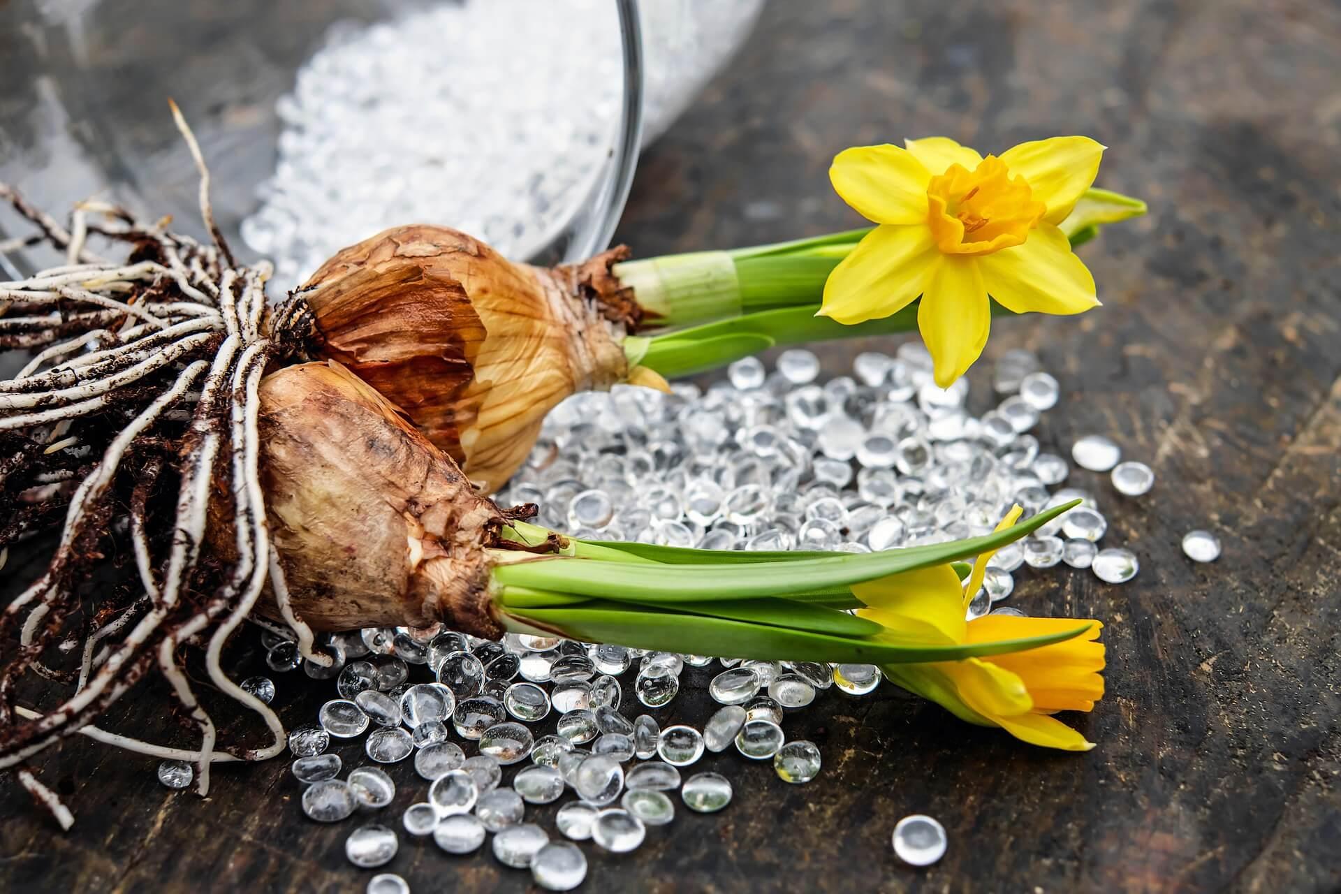 Bulbi In Vaso Di Vetro.Coltivare Bulbi Vasi Di Vetro 2 Vivaio Scariot