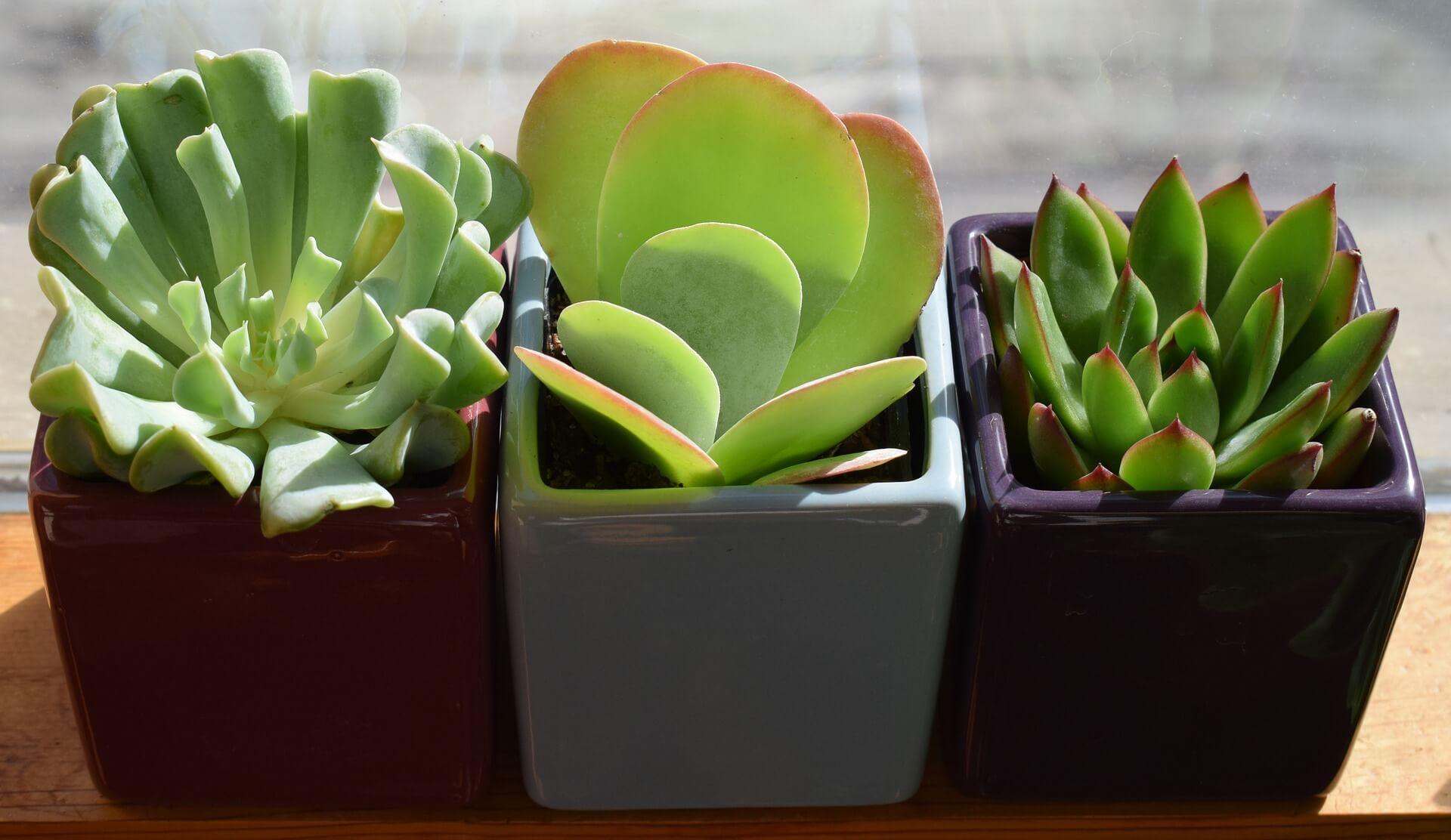 piante grasse da appartamento: 8 idee da copiare - vivaio scariot
