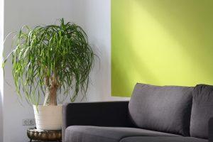 Arredare soggiorno con le piante