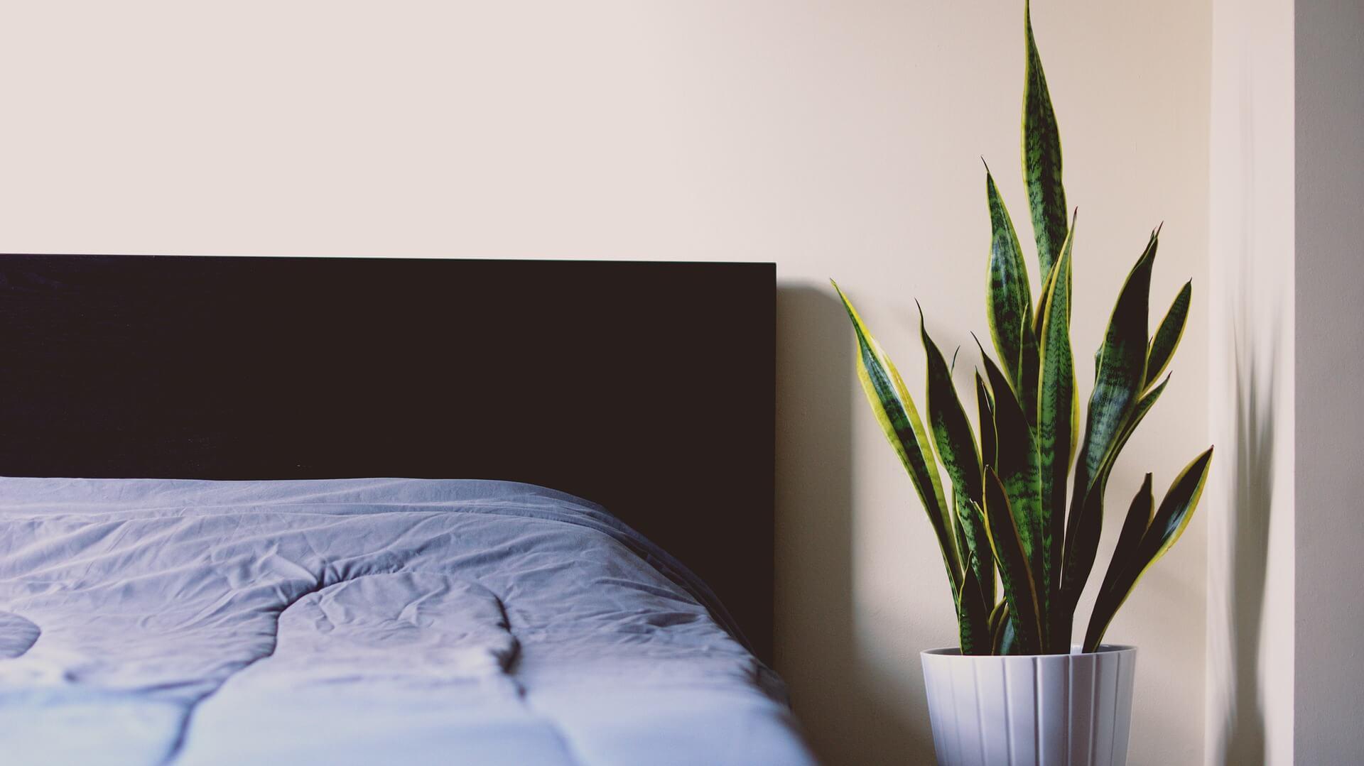piante-per-camera-da-letto - Vivaio Scariot
