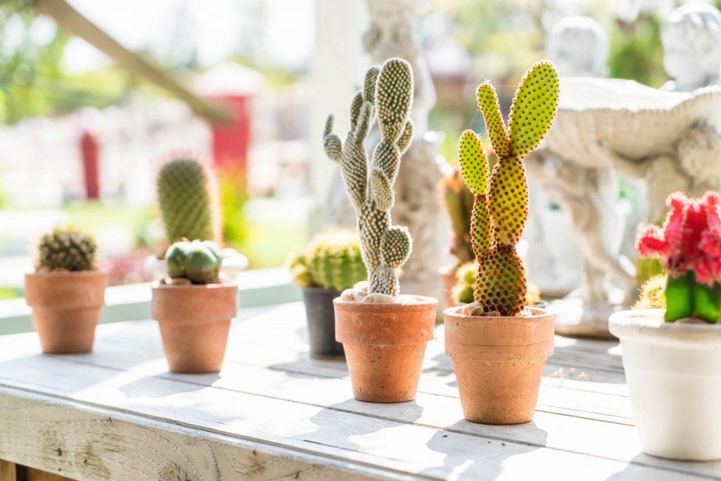 decorazioni piante grasse