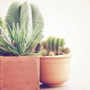piante grasse da interno