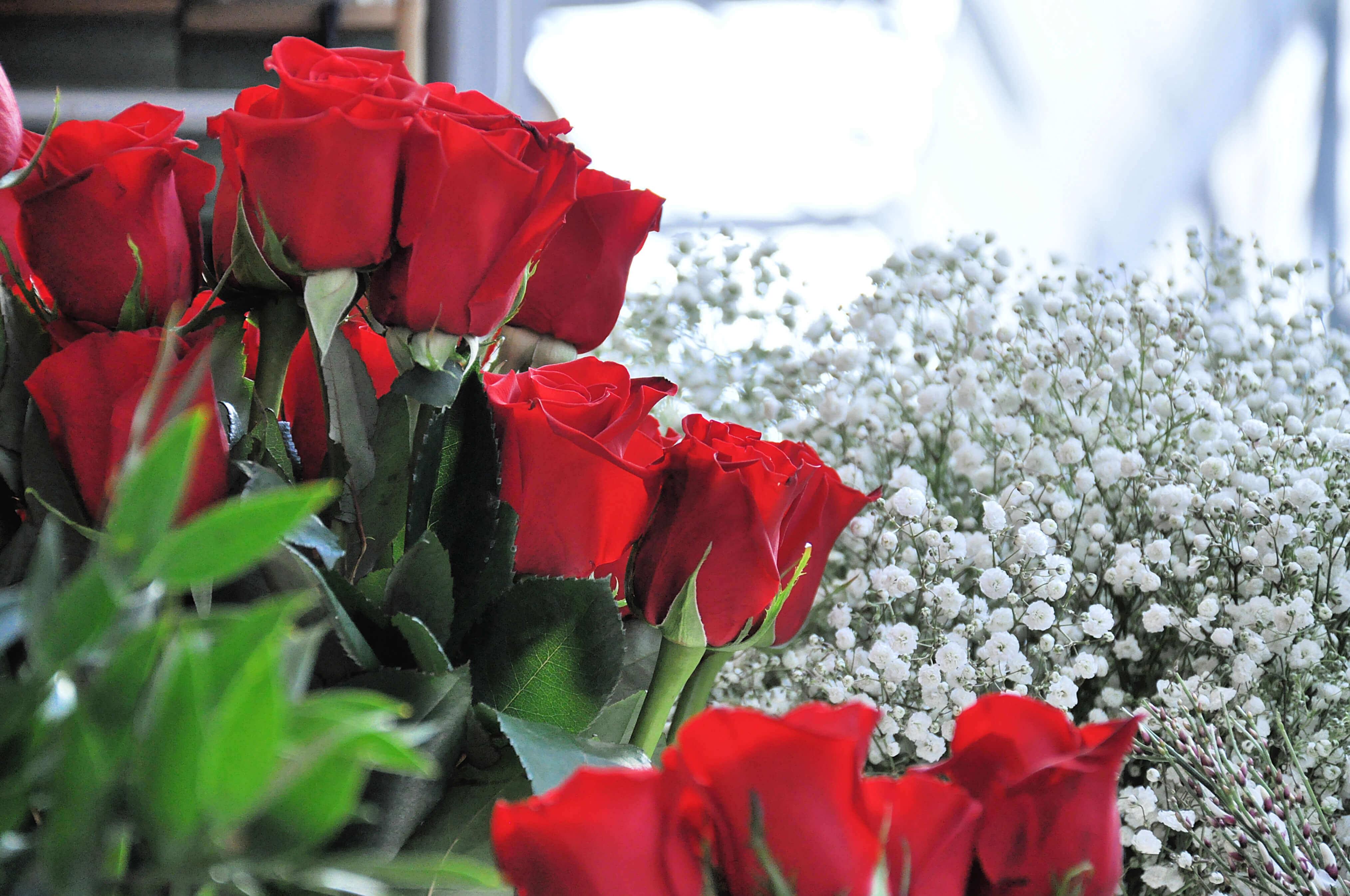 Anniversario Matrimonio Quante Rose.San Valentino Significato E Consigli Per Rose E Orchidee Vivaio